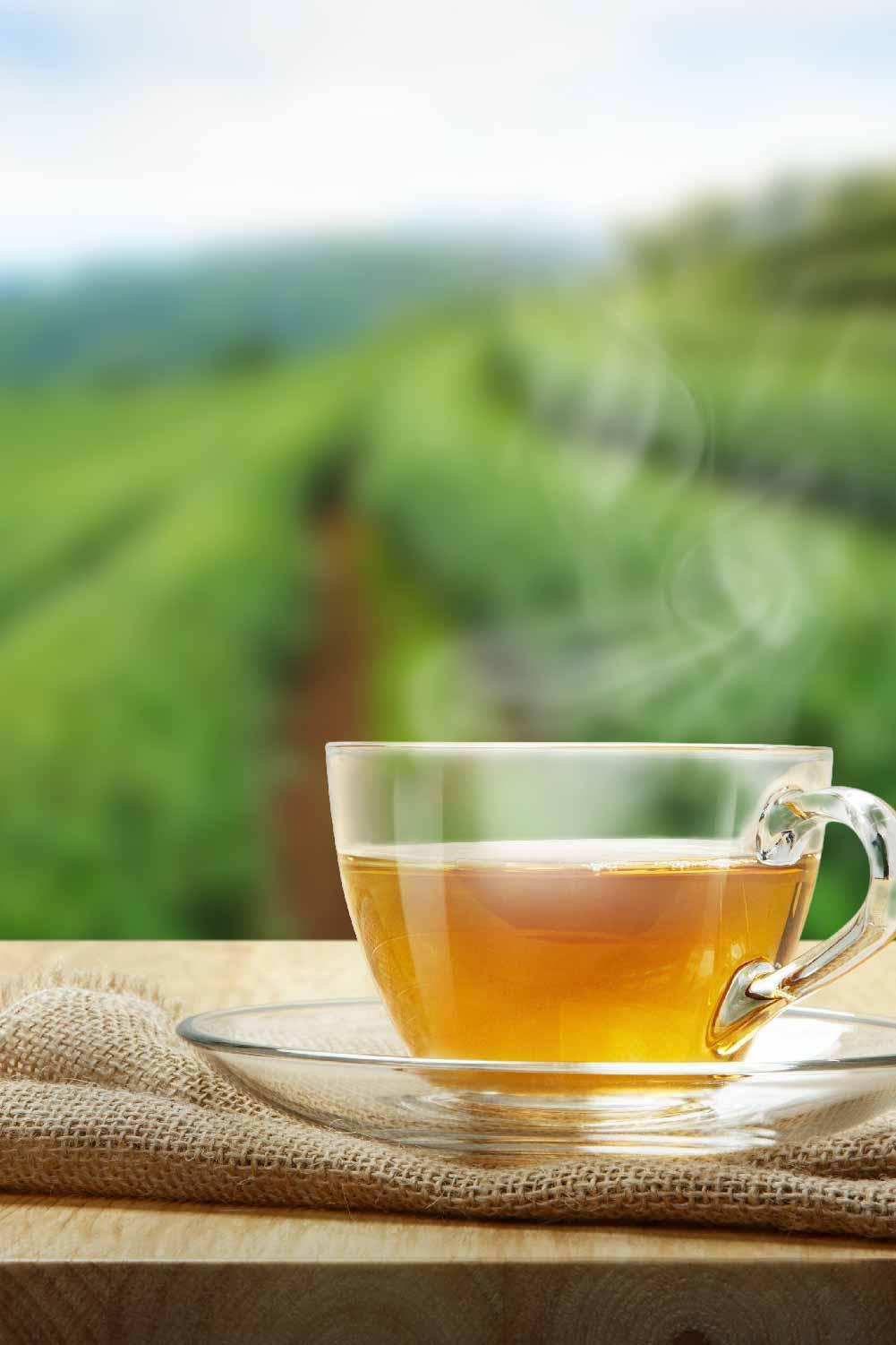 Sip on nature's goodness with our range of Organic Green Tea, grown in the Nilgiris at over 8000 ft. above sea level